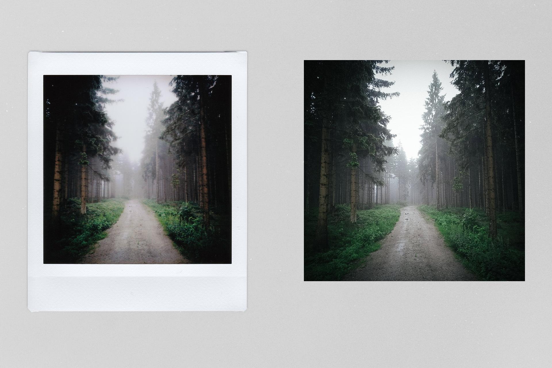 Wald im Harz mit Nebel – Fotografiert mit der Fuji Instax SQ10