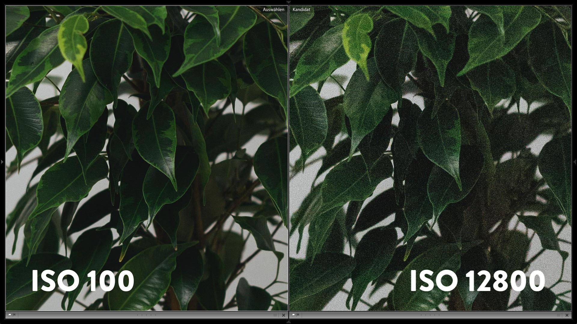 Bildrauschen bei ISO 100 vs. Bildrauschen bei ISO 12800 bei einer Canon EOS 5D Mk IV
