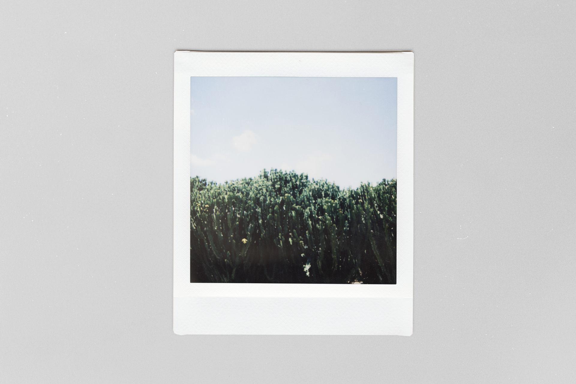 Botanicactus auf Mallorca
