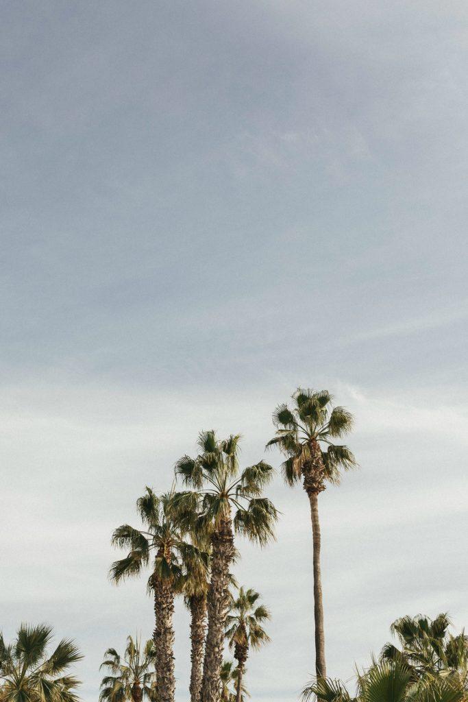 Hach, diese Palmen… am Parque de ejercicios del Paseo Marítimo